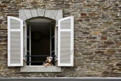 C3_Escher_Alina_17-Jahre_Hundefenster